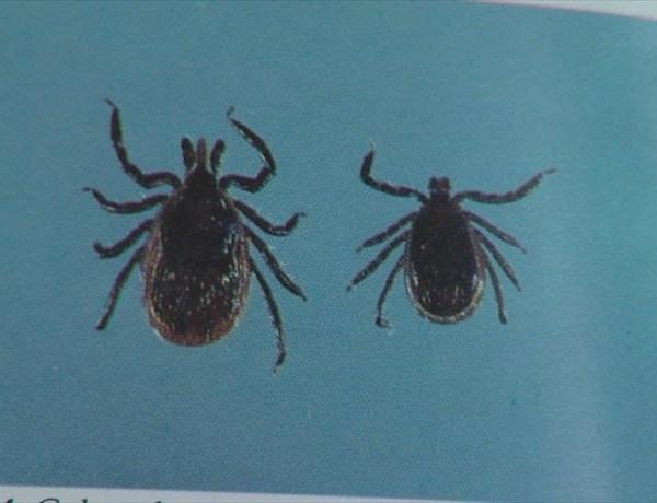 Lyme Disease Ticks_-142234469310640428