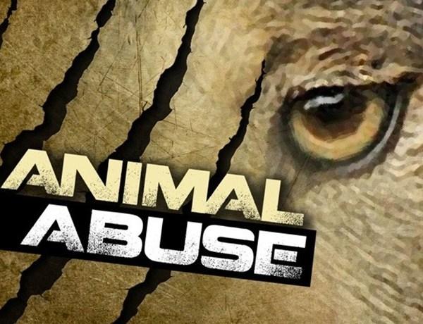 Animal Abuse_6605189982129311337