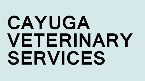 Caygua-Vet-Services_500x281_1459454503391.jpg