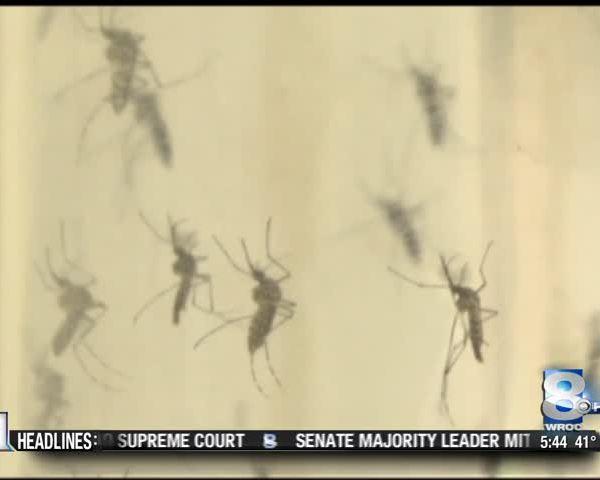 Zika virus update_28358579-159532-118809282