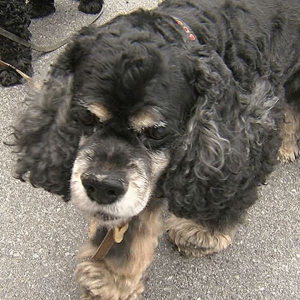 Doggy Reunion2_1475357447498.jpg