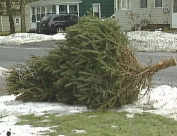 Christmas tree disposal_-8103624505169591081