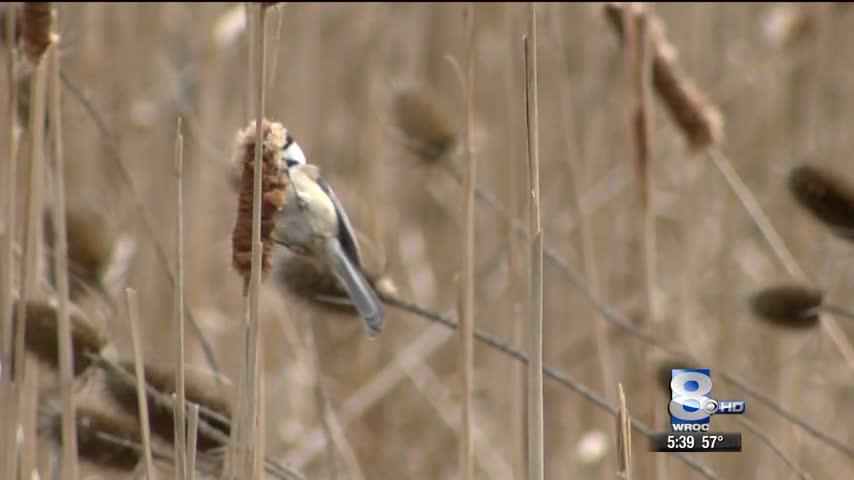 Birds Moving In Earlier_88007386-118809282
