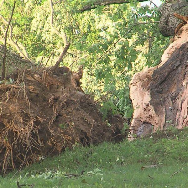 053017 Woodlawn Tree down_1496200078762.jpg