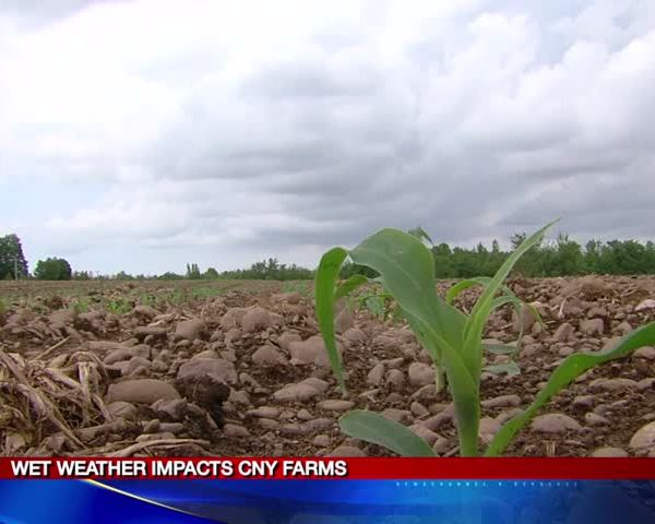 Wet weather impacts CNY farms_71109882