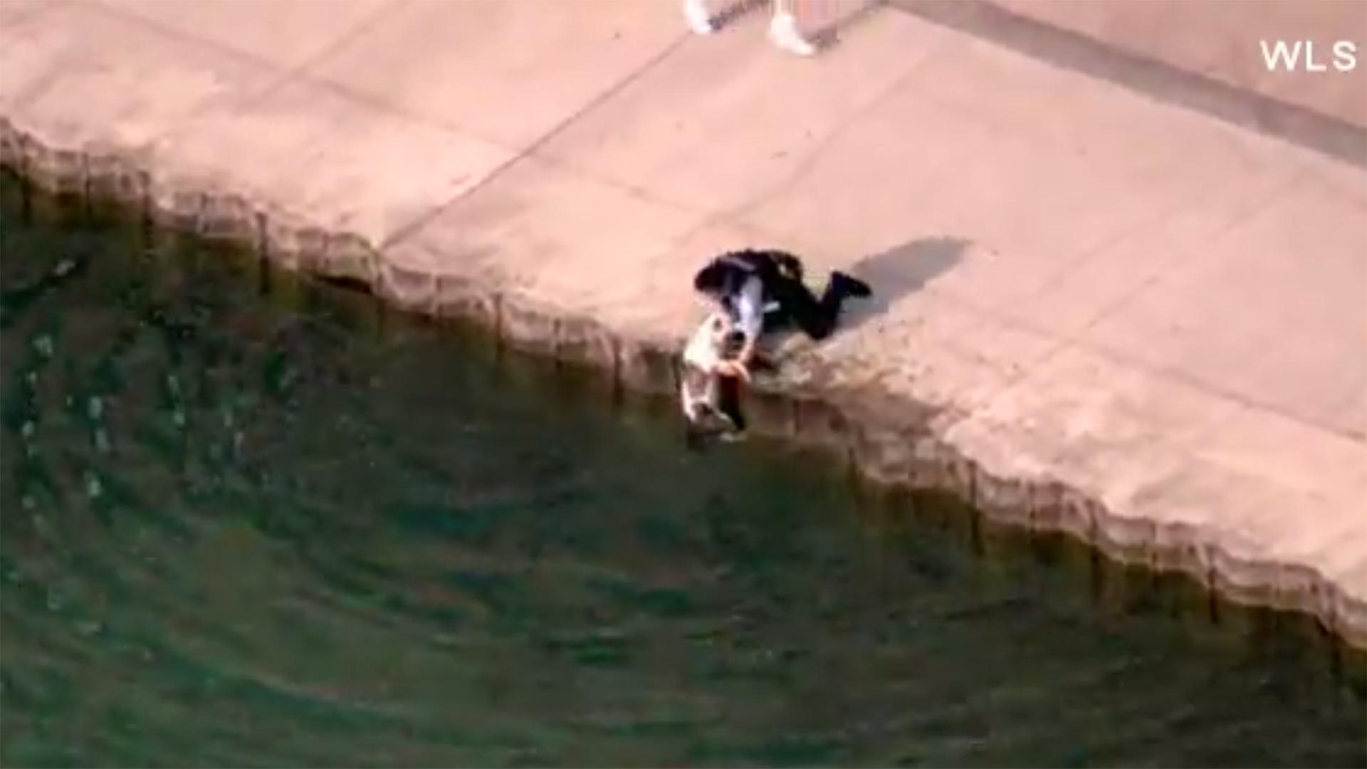 Chicago police officers save dog24263739-159532