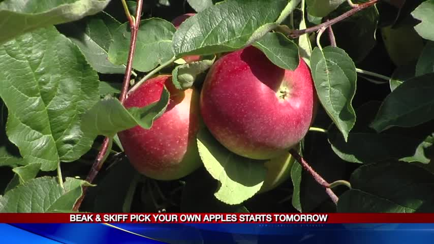 Apple picking season on the horizon 8-24-17_35035551
