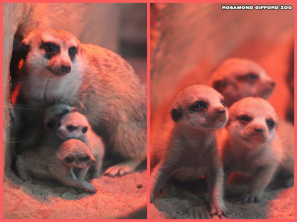 babies_1526492901116.jpg
