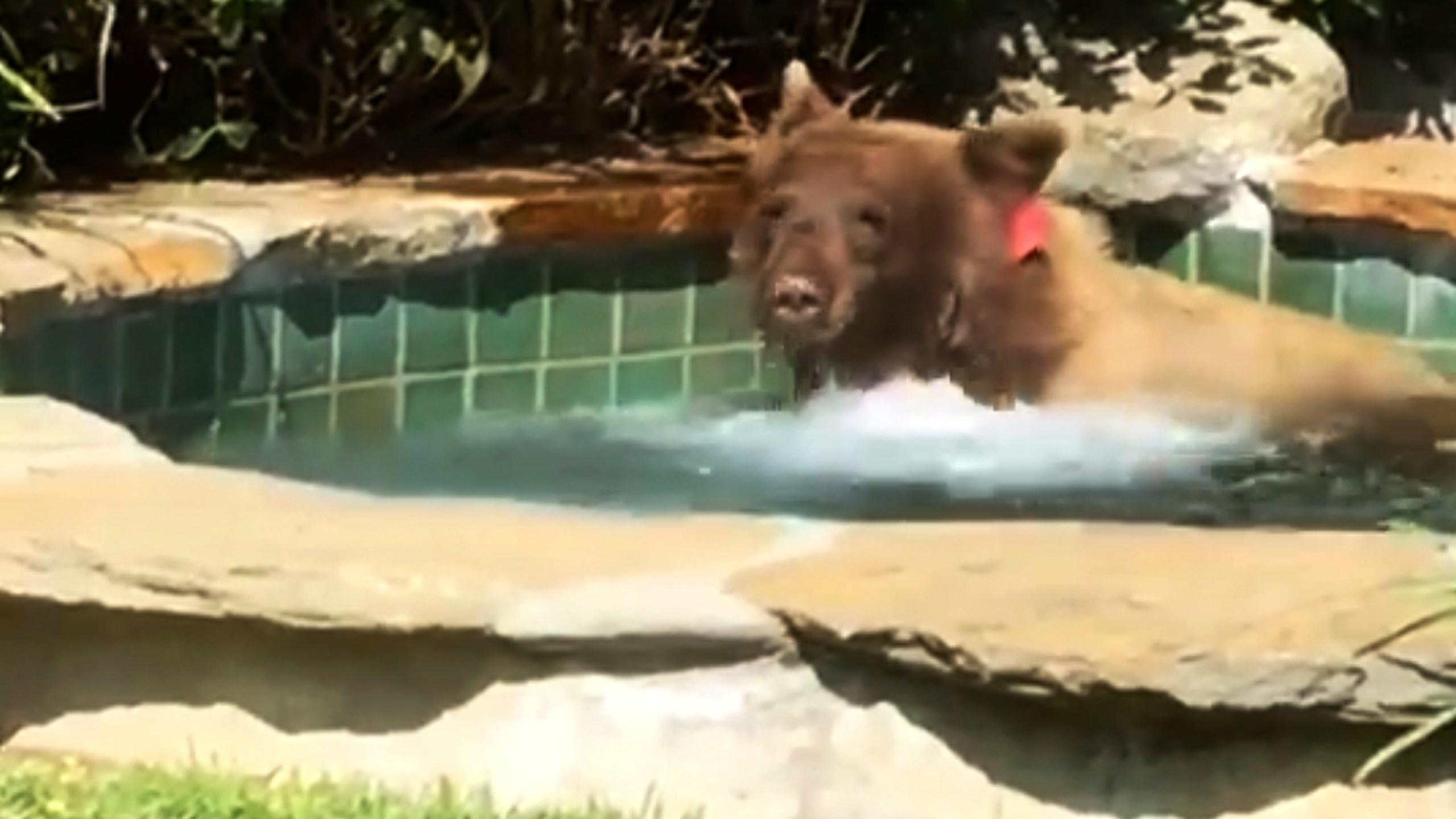 Bear_In_Hot_Tub_33190-159532.jpg36002792