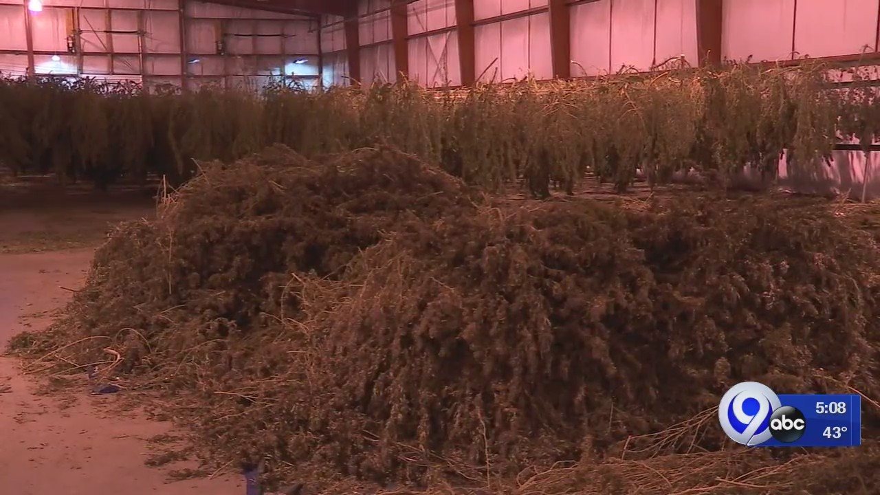 Harvesting hemp in Central New York