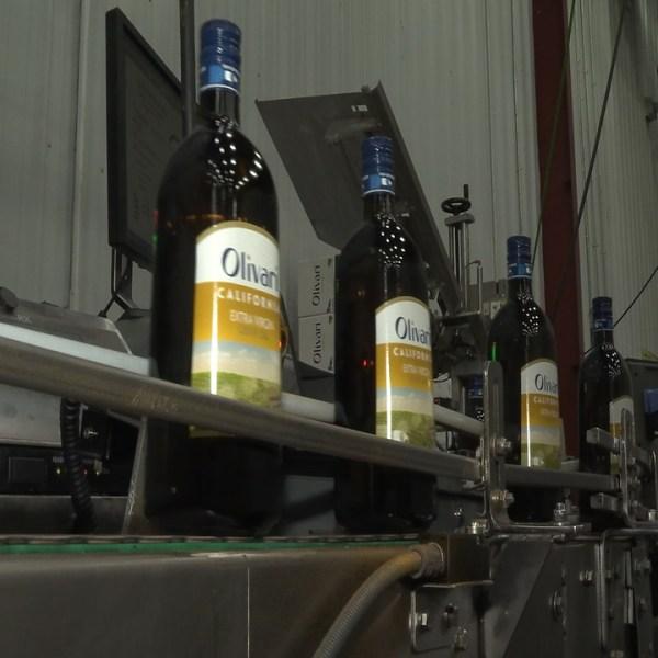 olivari olive oil