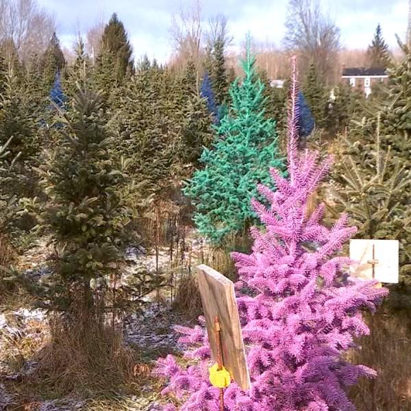 Painted Trees 2_1543943582173.jpg.jpg