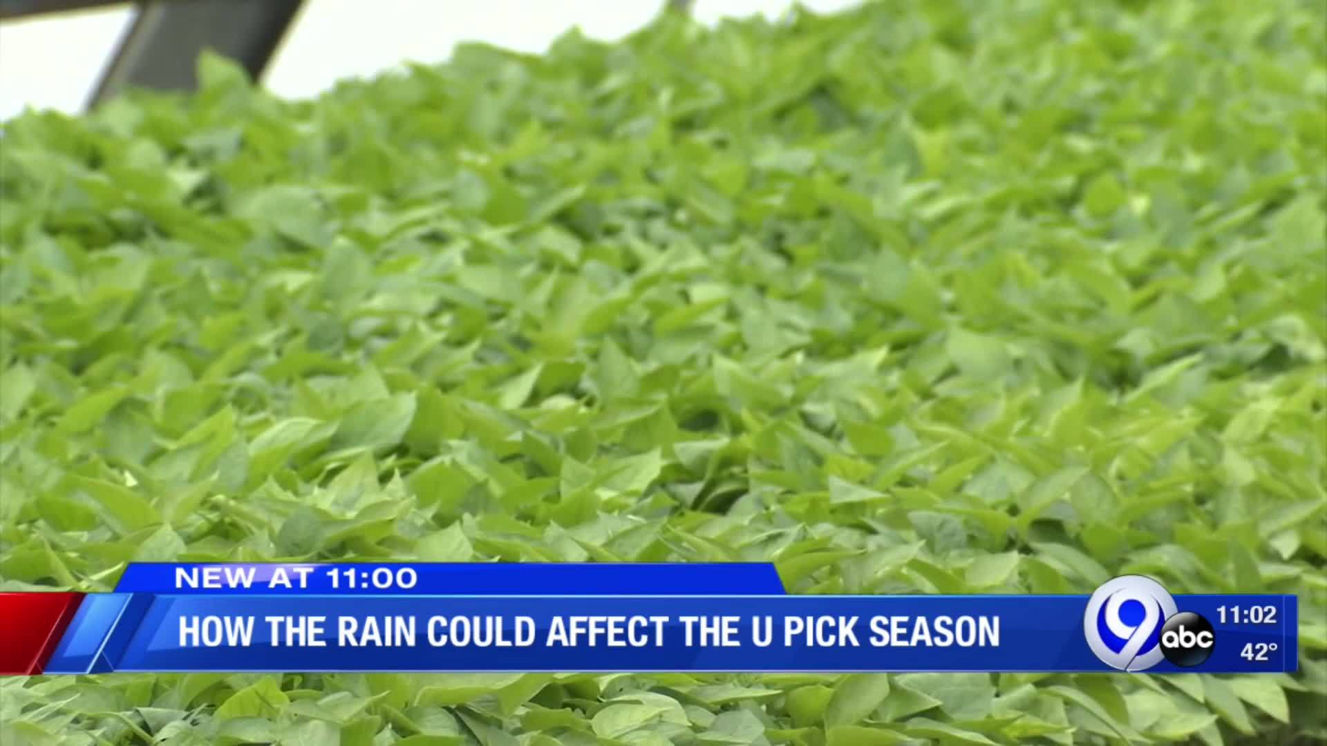 How_the_rain_could_affect_the_U_Pick_sea_8_20190514031002