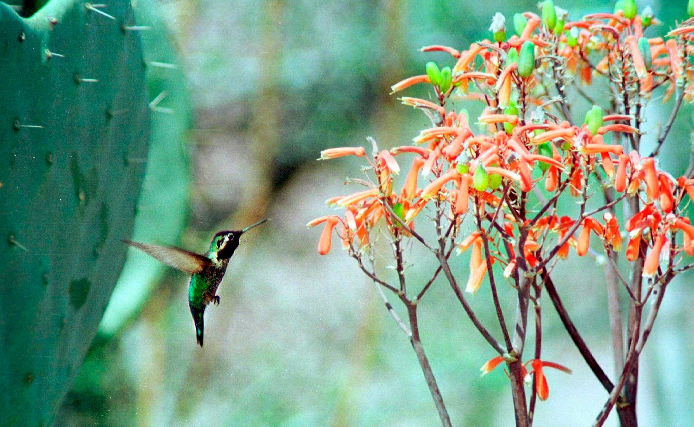 Popular_Birds_37453-159532.jpg12849719