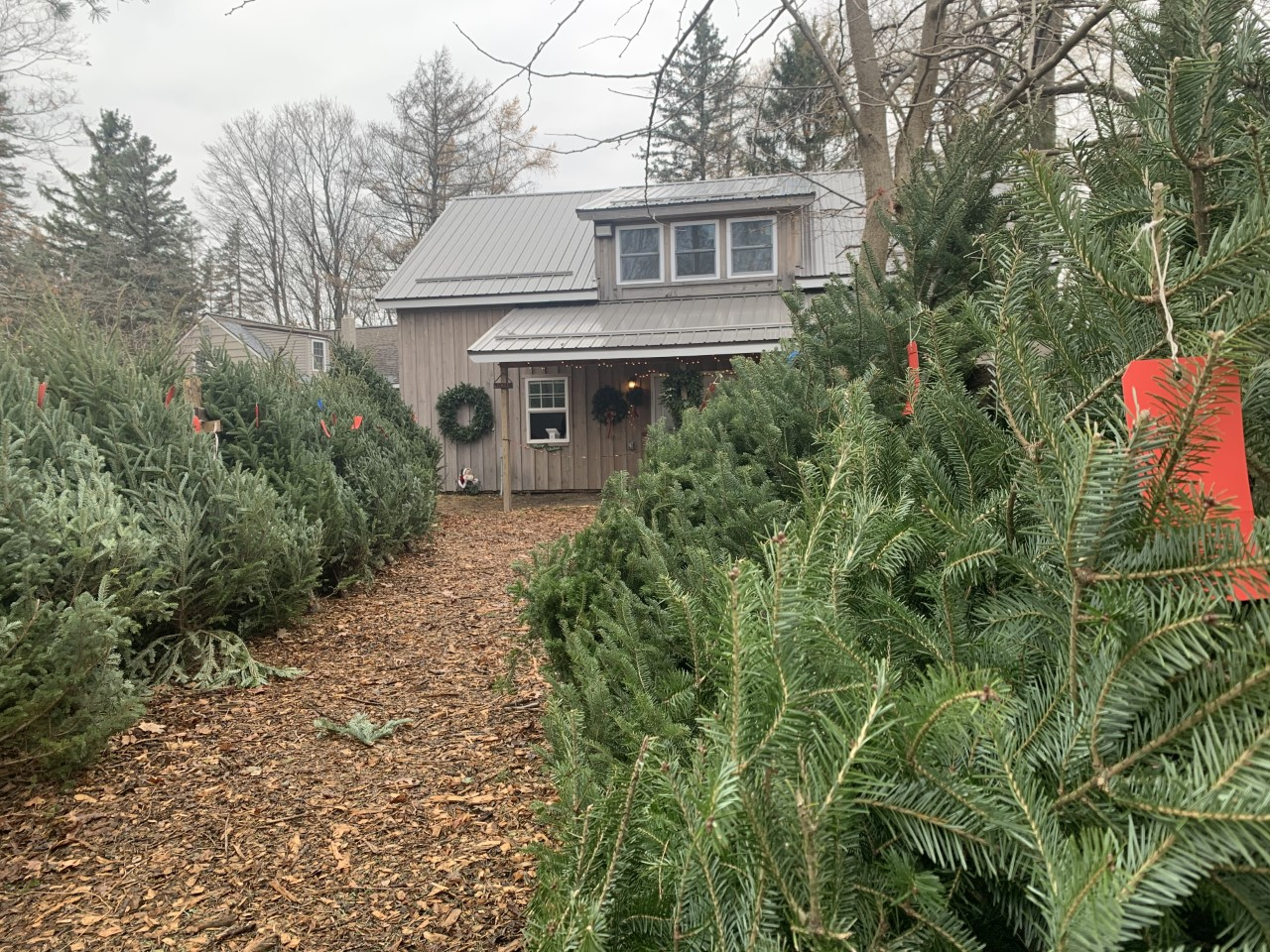 Where can you get a Christmas tree this holiday season?   WSYR